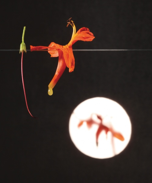 Flower and nectar, a snack (Credit: Francesc Guillamet, courtesy of Phaidon)