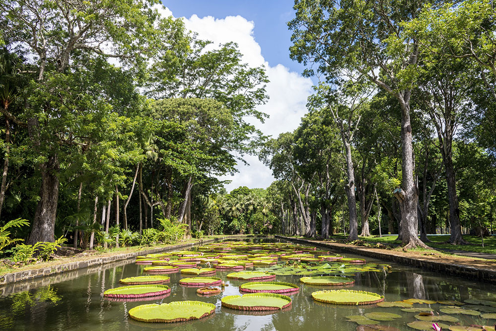 The Pamplemousses Botanical Garden (Credit: Mlenny/ istock.com)