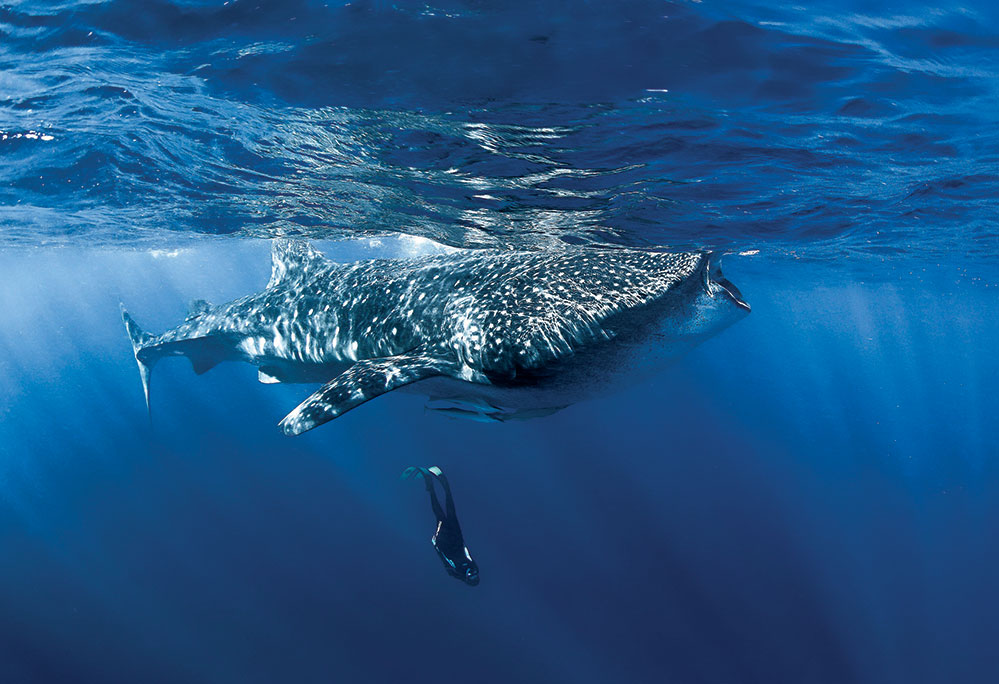 Swimming with whale sharks is on her bucket list. Photo by Getty Images
