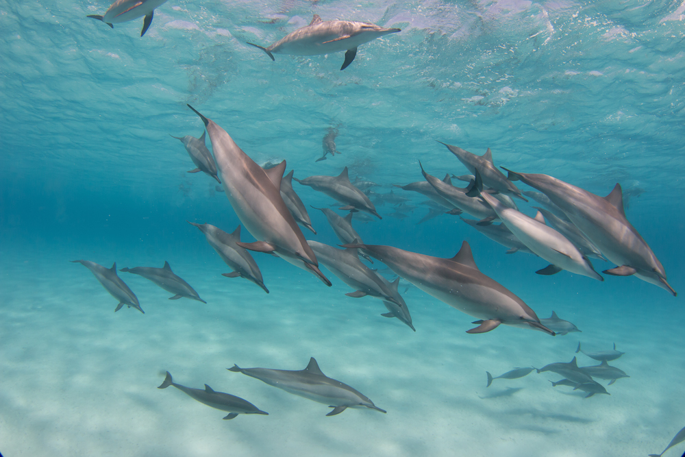 Take swimming with the dolphins to a whole new level.