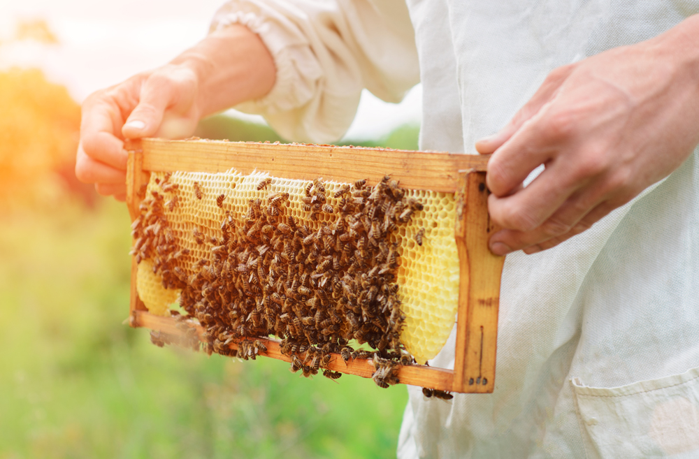 Hong Kong is home to several local bee-farms, producing fresh, delicious honey