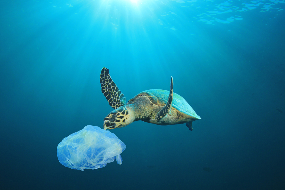 Floating plastics risk the health of endangered species, who often mistake the debris for food