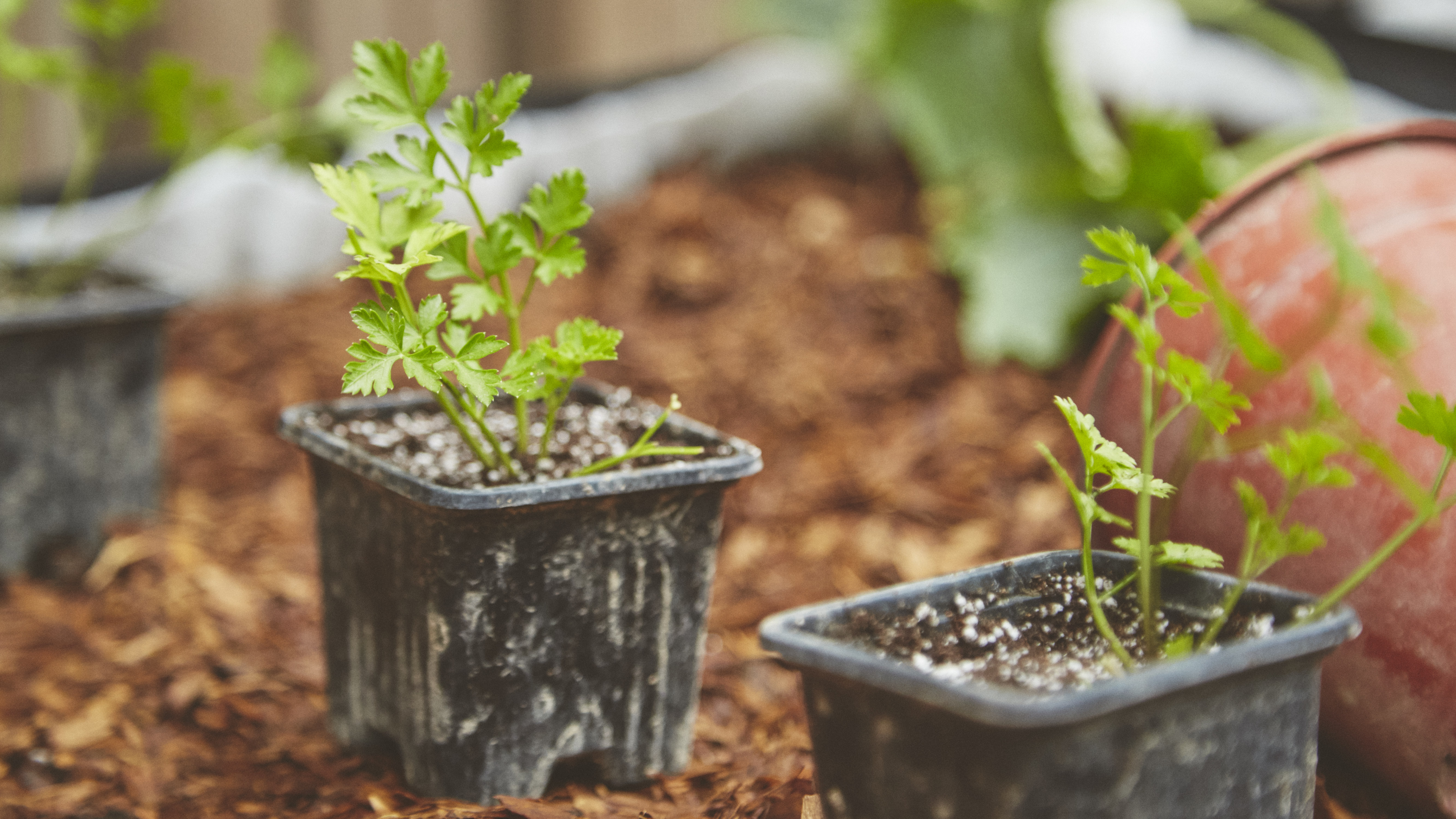 Learn how to grow and take care of your own plants at the Garage Greens garden