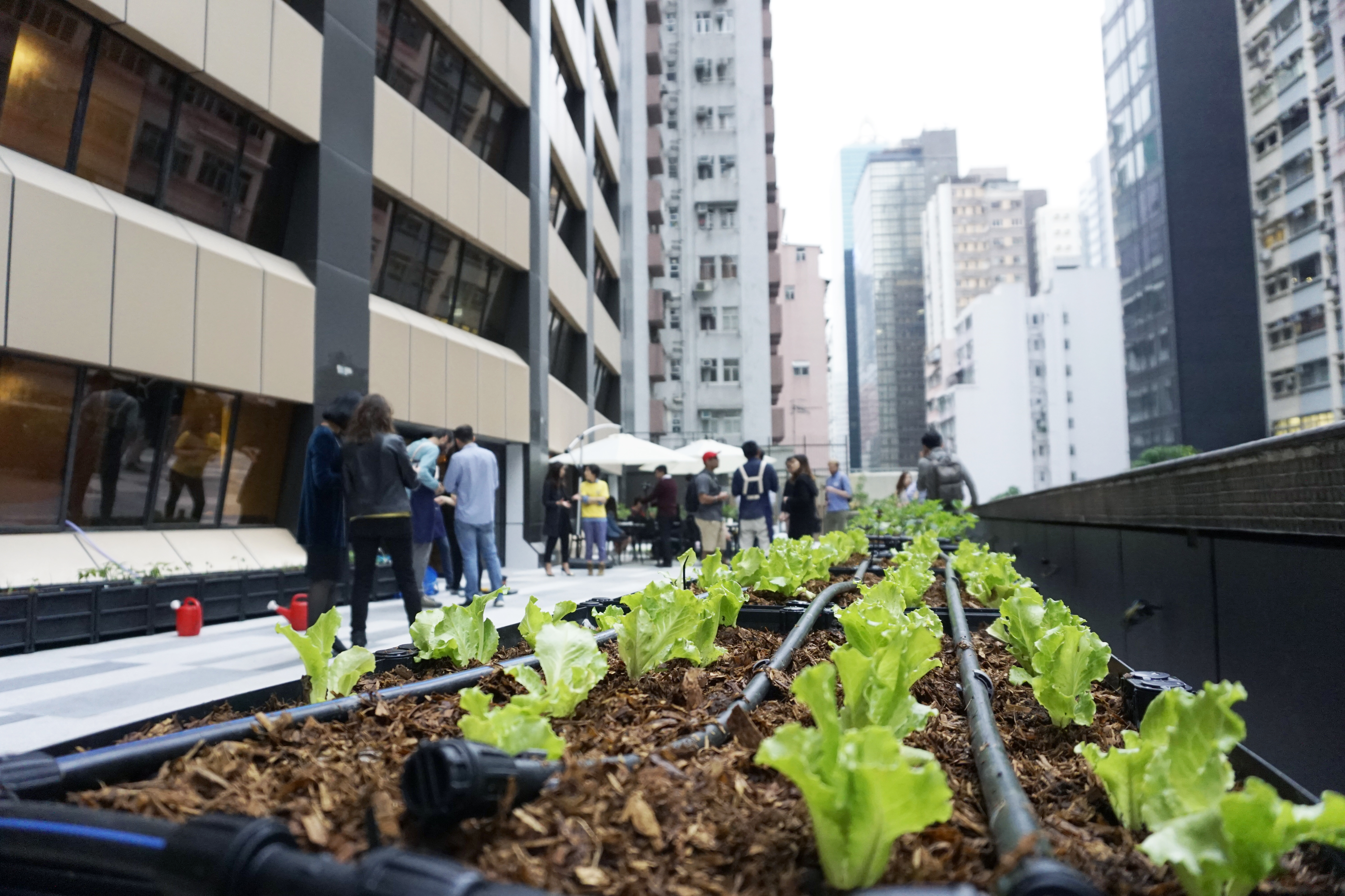 Participants can grow their own seasonal plants at the garden in Wan Chai