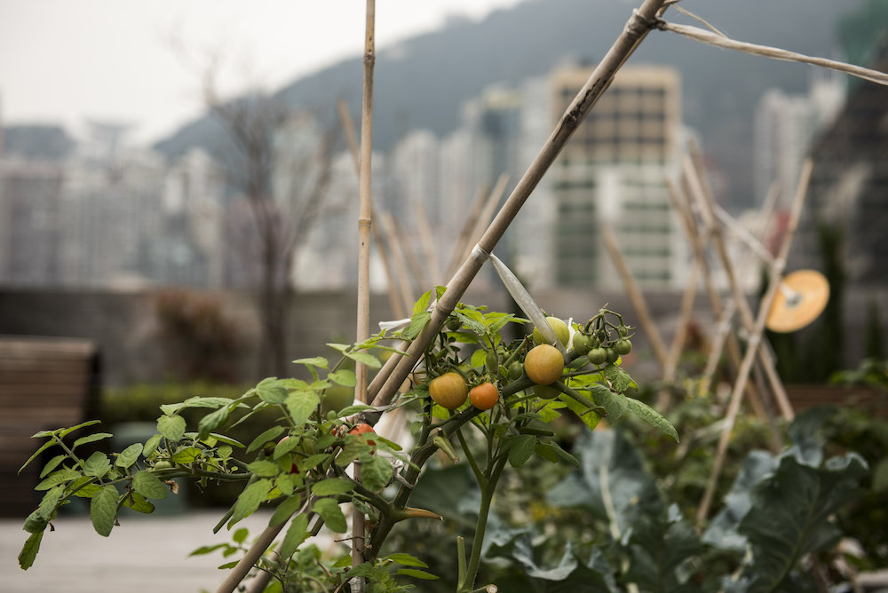 A rooftop garden will soon follow to provide Amber with fresh and sustainable ingredients