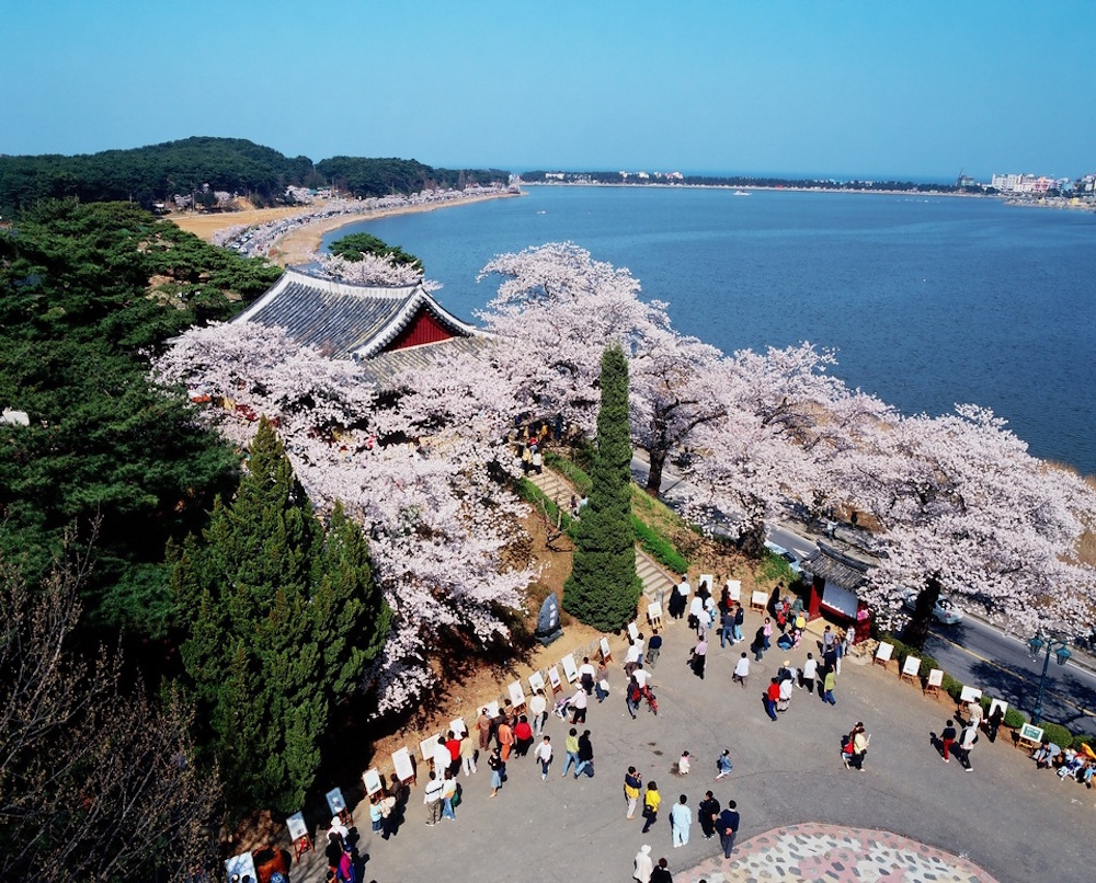 The Cherry Blossom Festival takes place every April in the Gangwon-do Province on the shores of the picturesque Gyeongpoho Lake
