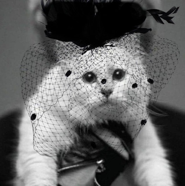Choupette Lagerfeld wears only the finest mourning gear
